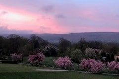 73_Landscape_PinkCherryBottomSunrise_DebsGriffiths
