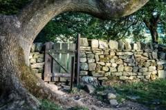 81_Landscape_TreeandStile_John-Fontana